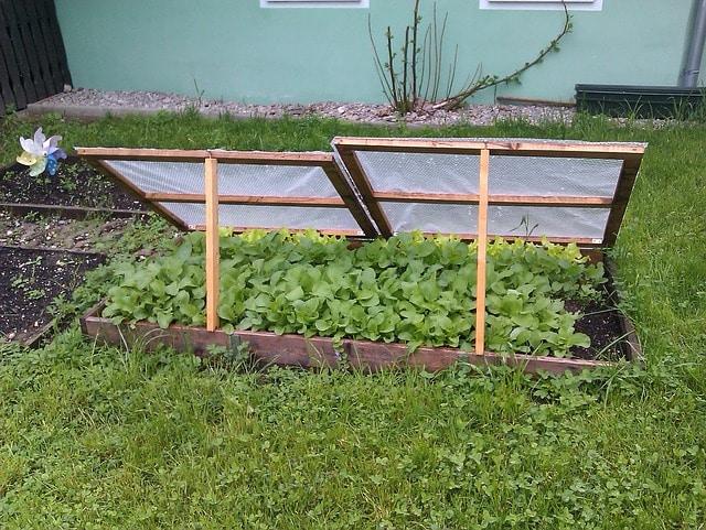 Das Frühbeet verschafft dem Hobbygärtner einen deutlichen Zeitvorteil. Sobald der schlimmste Frost vorbei ist, wird im Frühbeetkasten schon der erste Salat und das erste Gemüse angepflanzt.