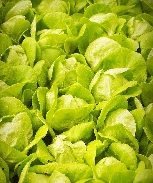 Salat im Frühbeet anpflanzen - Wann ist der richtige Zeitpunkt und welche Tricks gibt es?