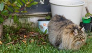 Unerwünschte Katzen aus dem Garten vertreiben