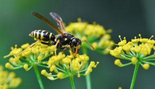 Wespen aus dem Garten vertreiben